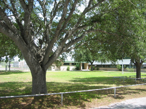 ... Encino Elementary School. The tree in the foreground is an